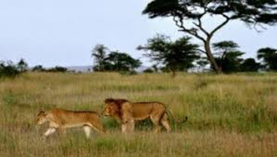 Chanua Africa Safari