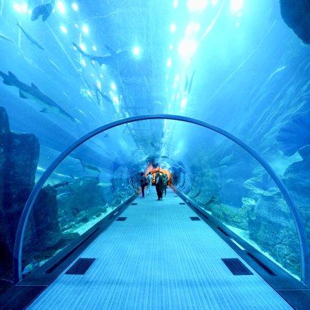 Dubai Aquarium Underwater Zoo Photo0