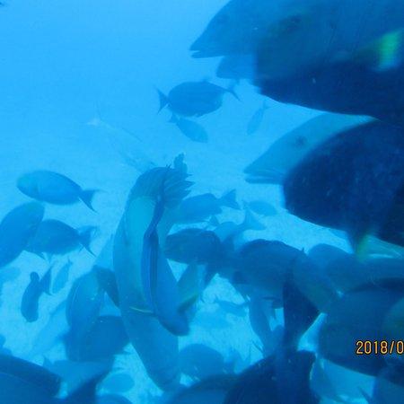 Whale Submarine Maldives: photo3.jpg