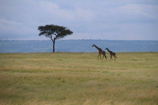 Great Plains Conservation Mara Plains Camp Aufnahme