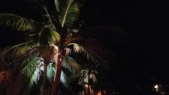 Restaurante El Alquimista: Lights reflecting off the coconut tree.