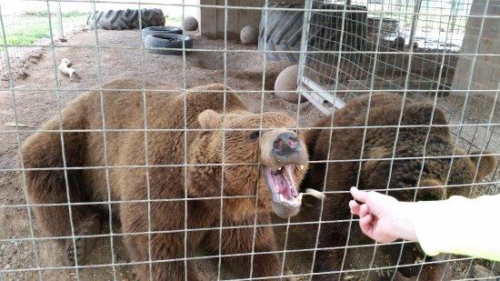 Wynnewood, Οκλαχόμα: Peanut for the retired circus bears!