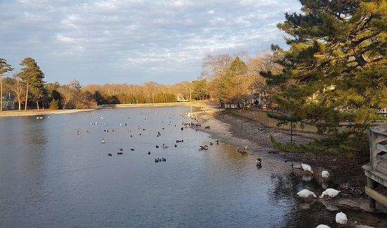 Smithville, NJ: The pond