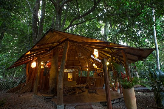 Tree House Lodge: tree house, a different experience