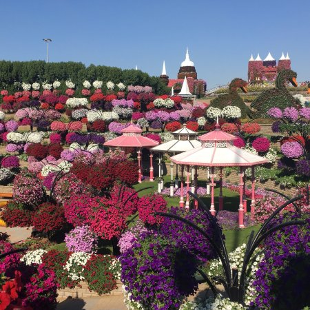 dubai miracle garden january 2018 - Miracle Garden Dubai