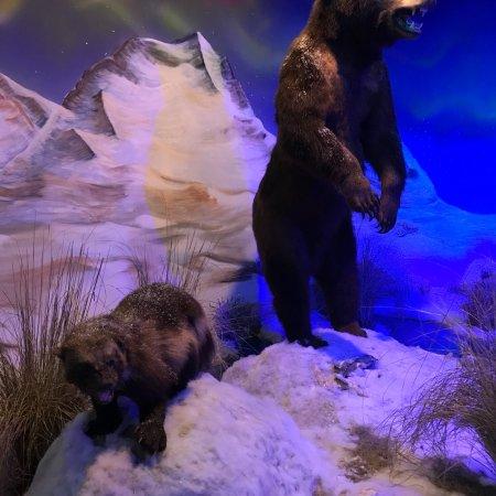 Review Bandera Natural History Museum