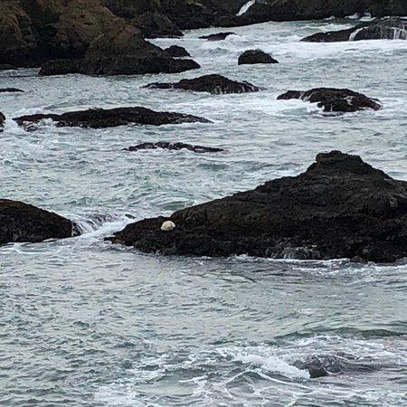 Glass Beach: photo1.jpg