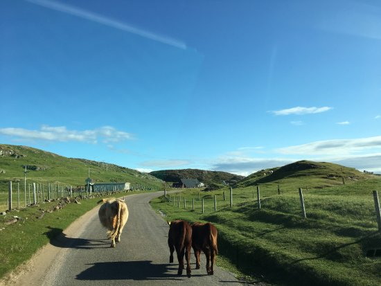 Clachtoll, UK: Headed into town for dinner- good thing we left extra time!