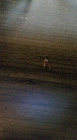 Travelodge by Wyndham Virginia Beach: Dead bug, cockroach?