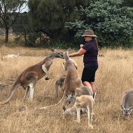 Cowes, ออสเตรเลีย: photo0.jpg