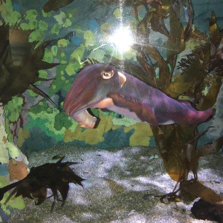 SEA LIFE Melbourne Aquarium : photo0.jpg
