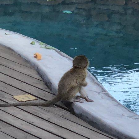 Singita Private Game Reserve, Güney Afrika: photo1.jpg