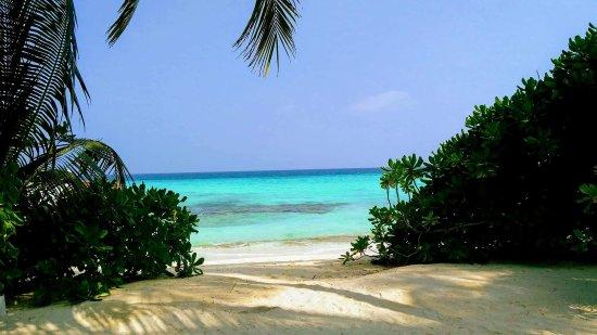 Kuramathi Island Resort: received_10210951883139731_large.jpg