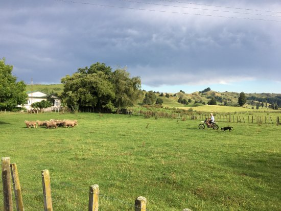 Owhango, Selandia Baru: Let's move those sheep!