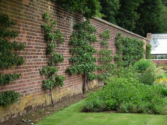 Grappenhall Heys Walled Garden: Espalier Fruit Trees.