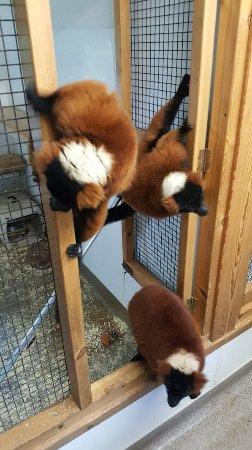Linton Zoo: 20180128_135012_large.jpg