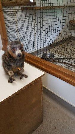 Linton Zoo: 20180128_133402_large.jpg