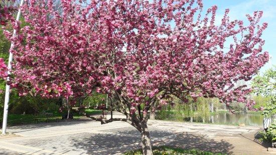 Park of Yuriy Gagarin
