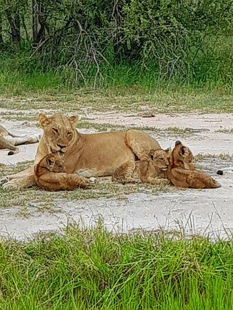 Mala Mala Private Game Reserve, Güney Afrika: 20180116_104101_large.jpg