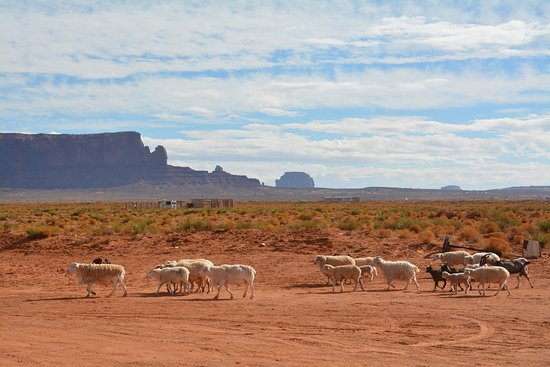 Zdjęcie Grand Canyon, Monument Valley, and Zion 3-Day Tour from Las Vegas