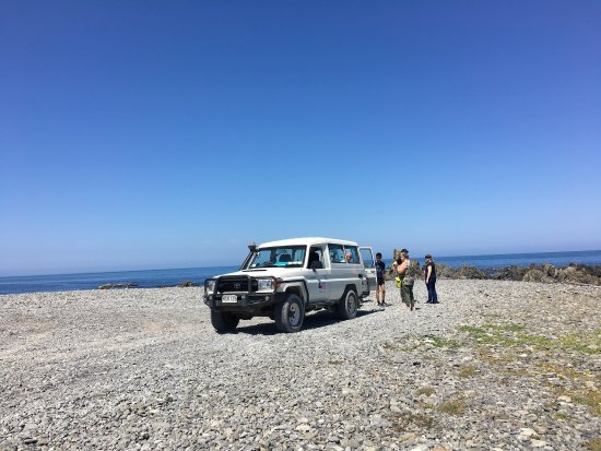 Seal Coast Safari : photo0.jpg
