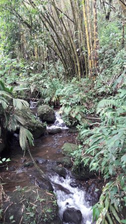 Guayabo National Park and Monument: 20180129_111324_large.jpg