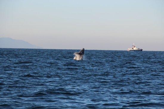 Whale Watching Photo Safari by Vallarta Adventures: ballena bebé