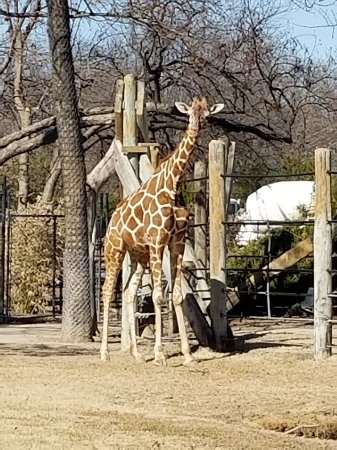 Fort Worth Zoo : More zoo pictures