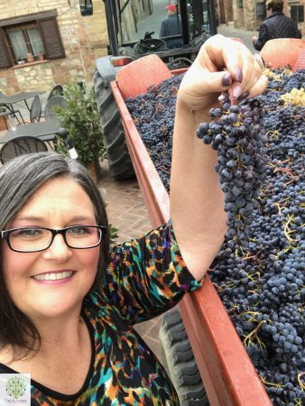 Montefollonico, Ιταλία: Linda with the grape harvest with Cook in Tuscany