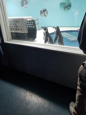 Aquarium of Niagara: 20180122_150615_large.jpg