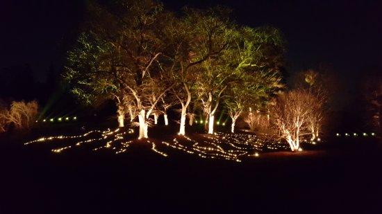 Morton Arboretum: Light show in the trees