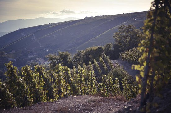 Full-Day Private Rhône Valley Wine...