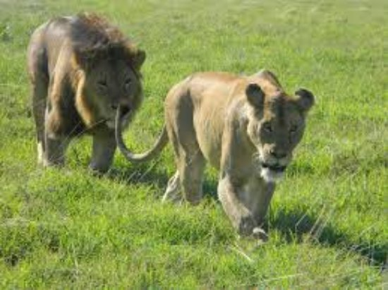 Langoi Tanzania Safaris