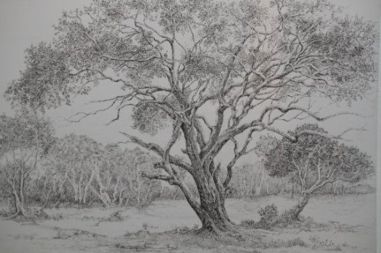 lionel wendt memorial art gallery pencil drawing from the exhibition for the love of