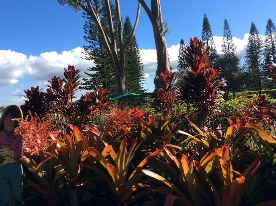 Roberts Hawaii Tours Oahu Reviews