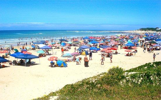 ca343919e Dolphin Beach