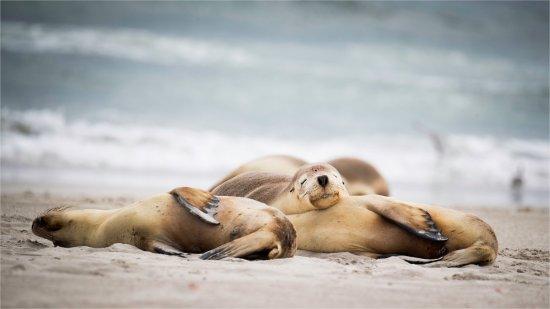 Kingscote, Australia: Chilling at seal bay