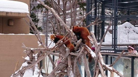 Maruyama Zoo: DSC_0208_large.jpg