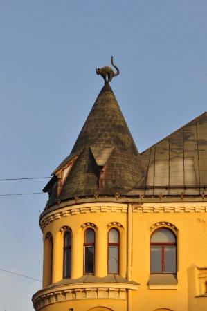 Cat House: Посмотрите вверх