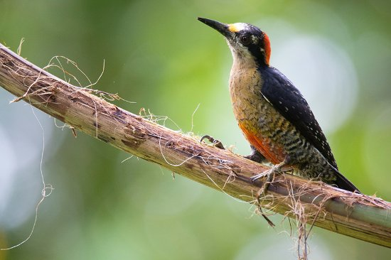 La Carolina Lodge: Great birding