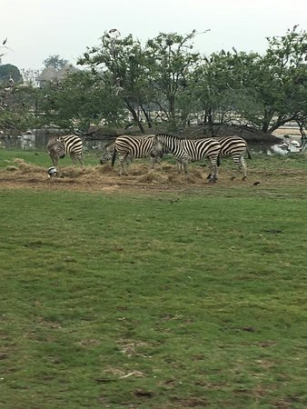 Safari World (Bangkok) - All You Need to Know Before You ...