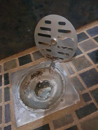 San Ignacio Resort Hotel: No era tan difícil de limpiar el drenaje!