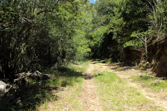 Part of the Bushbuck Trail