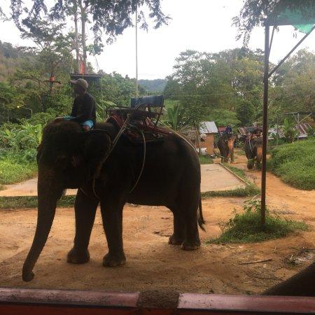 Seaview Elephant Camp : photo1.jpg