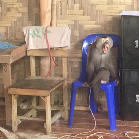 Seaview Elephant Camp: photo3.jpg
