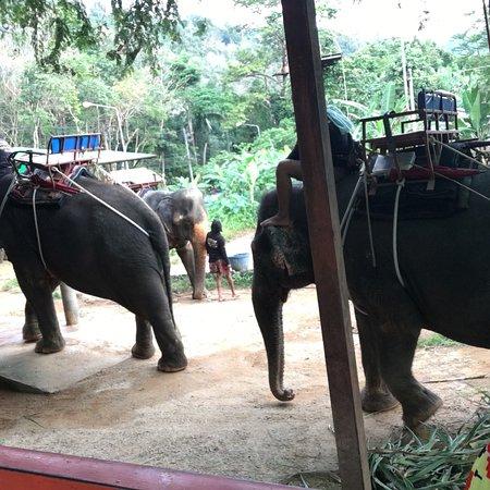 Seaview Elephant Camp: photo4.jpg
