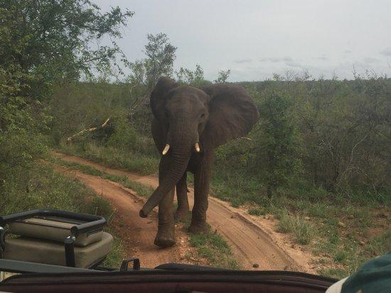 Garonga Safari Camp: photo1.jpg