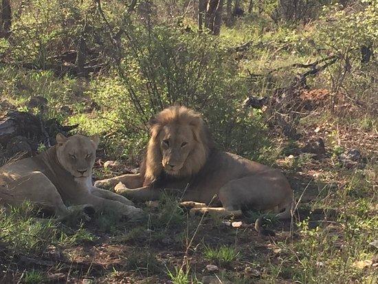 Garonga Safari Camp: photo2.jpg