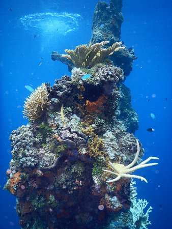 Chuuk, Federated States of Micronesia: Blue Lagoon Diving