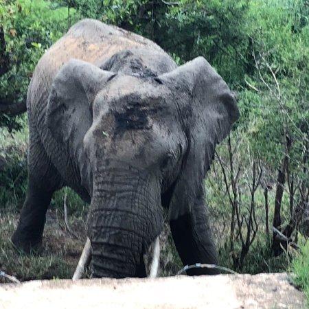 Buckler's Africa: photo1.jpg